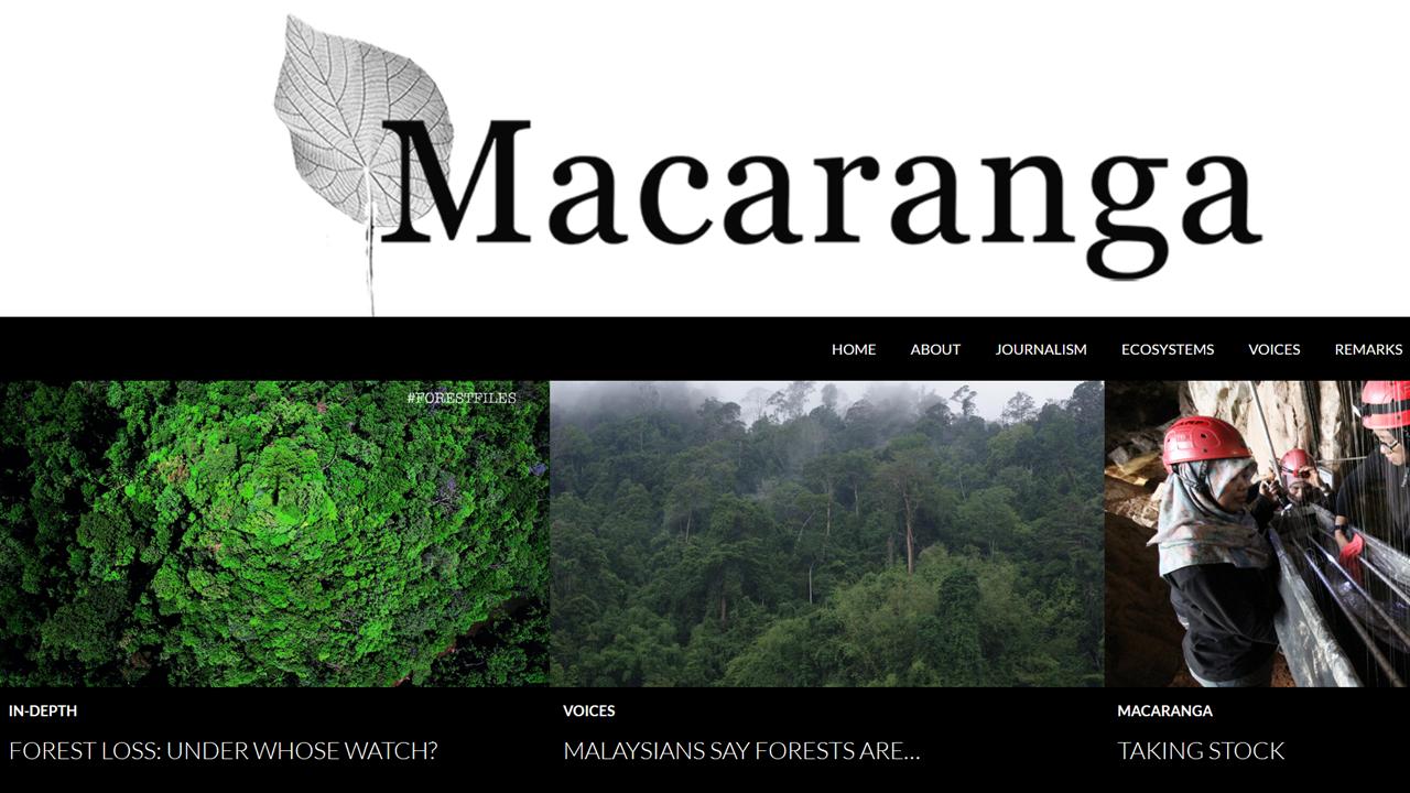 Macaranga front page